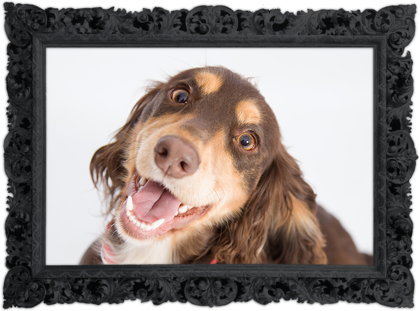 Pet photography, Wirral